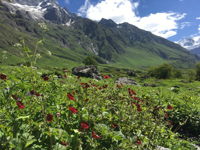 Flowers_Blossom_At_valley_of_flowers_Chamoli,_India.jpg_35